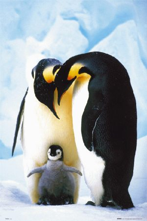 Animals - Penguins